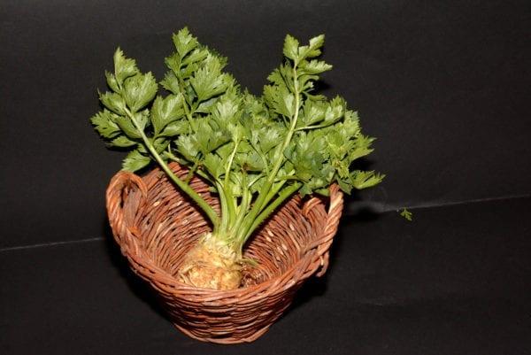 Celer koren organski
