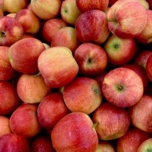Jabuke organik