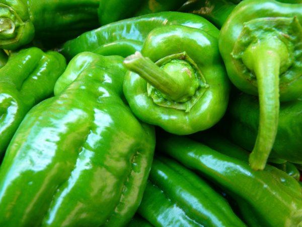 organska zelena paprika